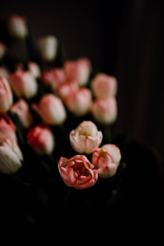 portfolio do wywiadu zawód fotograf fotograficzne kursy online Kobieca fotoszkola tulipany